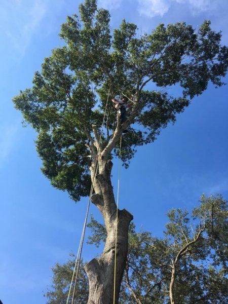 Kevin's Tree Service